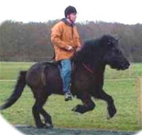 how much weight can a horse carry comfortably pony riders weight and height vs pony size discussion