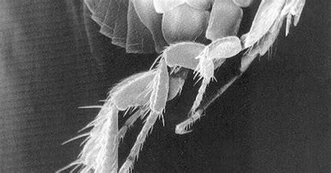 como eliminar las pulgas en casa c 243 mo eliminar las pulgas de la ropa de cama remedios