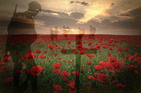 google images poppies flanders field poppies torch google search militar