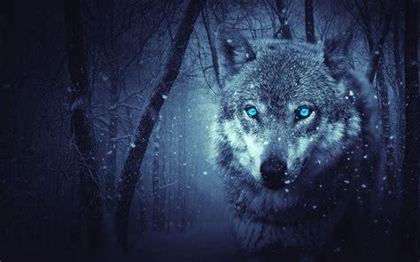 imagenes de lobos en 4k download 4k imagens lobo arte trevas olhos azuis