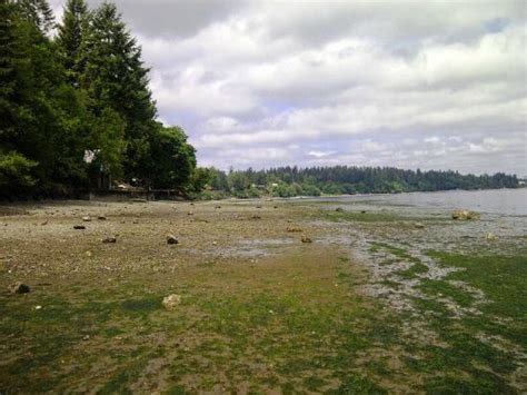 tolmie state park a washington park located nearby gig tolmie state park picture of tolmie state park olympia