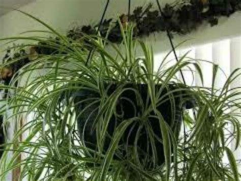 plants at home vastu tips to keep indoor plants boldsky com