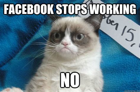 Unhappy Cat Meme - gallery for gt angry cat facebook