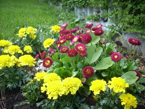 fiori da giardino fiori da bordura piante perenni fiori da bordura