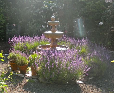 Fall Patio by This Week In The Garden Lavender Blueberry Hill