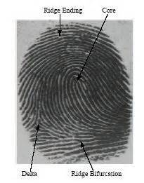 fingerprint pattern meaning article what is the fbi s automated fingerprint