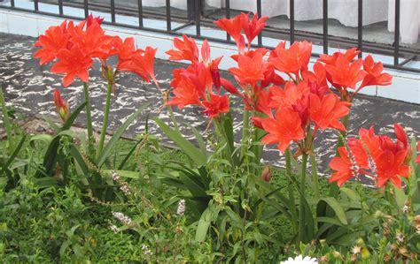 plantas para jardines plantas para un jard 237 n o balc 243 n con mucho sol el blog