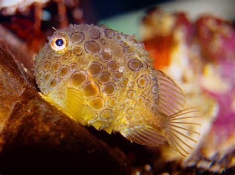 warum haben fische schuppen warum haben fische schuppen