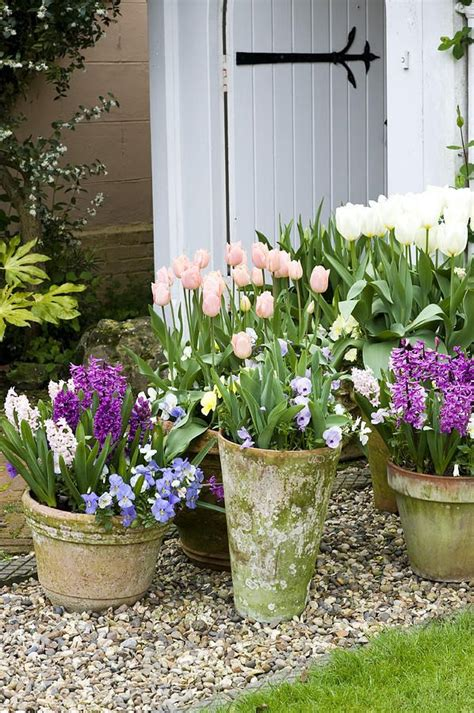 Flower Gardening In Pots Tulips In Pots I Must Remember This For Next Year To Plant Some More Now That I Deer
