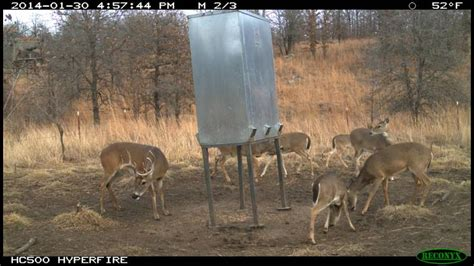 what can i feed the deer in my backyard what can i feed the deer in my backyard 28 images