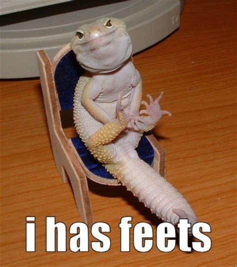 Hehehe Lizard Meme - caffeine monkey s adventures hurricane shutter injured