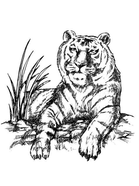tigre seduta una tigre realistica seduta da colorare disegni da