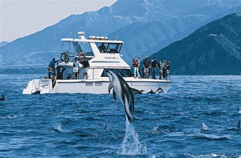 cc stuttgart neuseeland schwimmen und spielen mit flipper reise