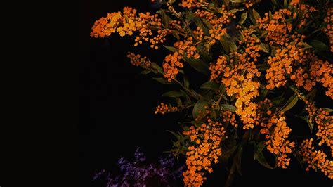 apple orange flower dark ios iphones papersco