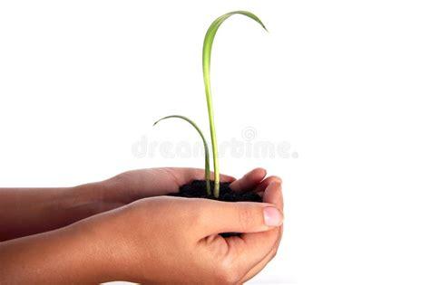 imagenes libres manos hombres que sostienen una planta entre las manos im 225 genes