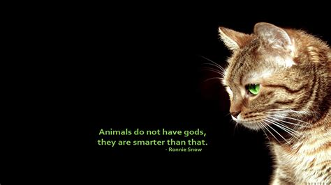 cat wallpaper with quotes text cats animals quotes simple background black