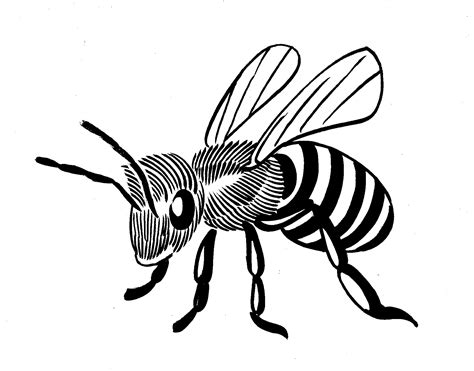 line drawing bee line drawing clipart best