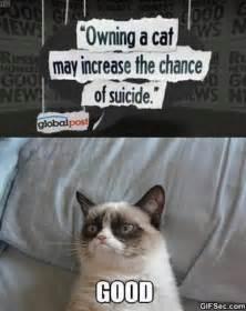 The Grumpy Cat Memes - database error