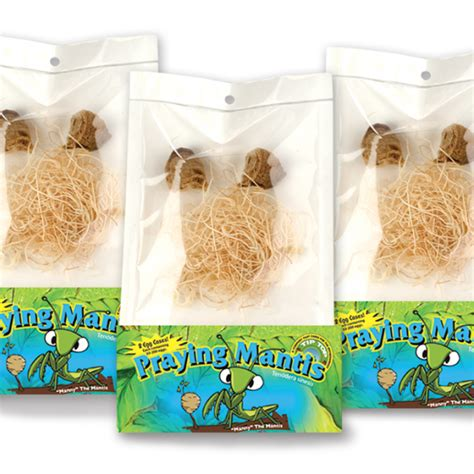 Green Thumb Nursery San Marcos by Live Praying Mantis Egg Cases Order Beneficial Insects
