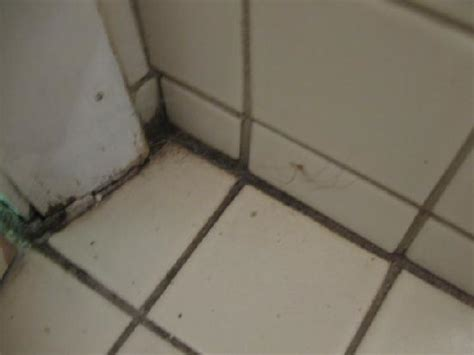 mildew bathroom cleaning mildew images bloguez com