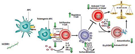 sle resume for biology major xtl biopharmaceuticals to focus on asset sle lupus