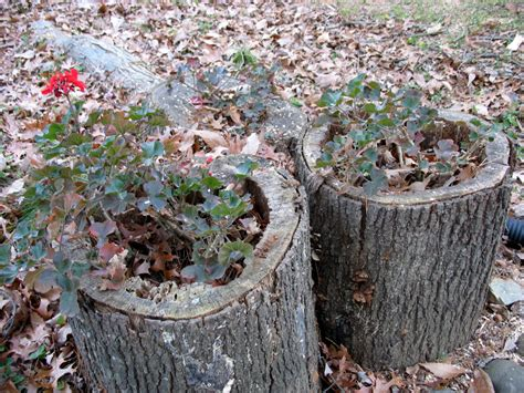 Stump Planter by Hollow Stump Planters The Squirrel Nutwork