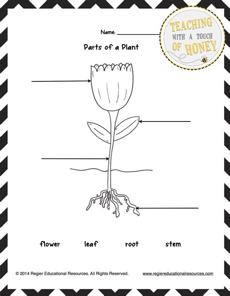 Label Parts Of The Worksheet by 7 Best Images Of Flower Parts Template Label Flower