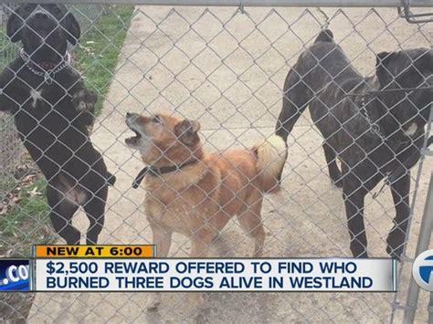 mhs offers reward   dogs burned alive