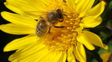 Yellow Bee the hive kew