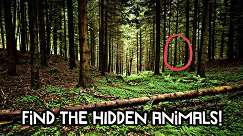 Find Photos Of Can You Find All The Animals Impossible Challenge
