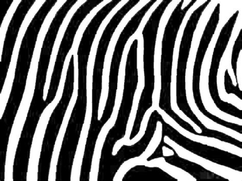 zebra design 15 zebra patterns free pat png vector eps format