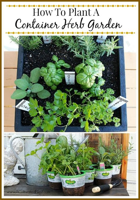how to grow a herb garden tips for planting a container herb garden
