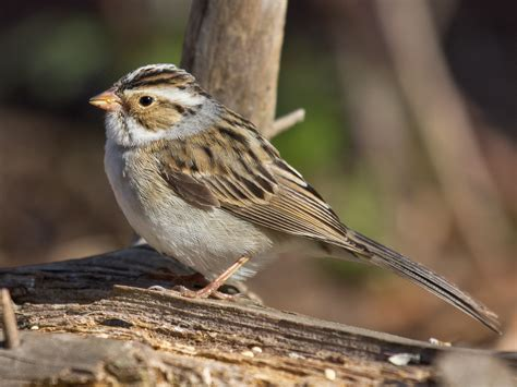 small birds capitalize on weather patterns during epic