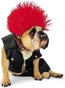 dogs halloween costume petsofoz com blog pet news information and product
