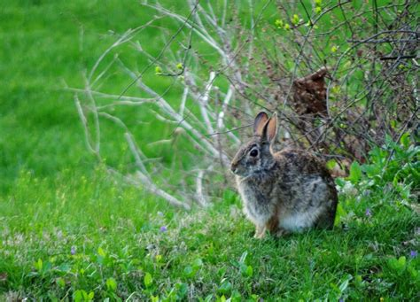backyard bunnies spring backyard bunny pentaxforums com