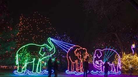 Zoo Light Hours by Denver Zoo S 25th Annual Zoo Lights Begins Dec 4 Yourhub