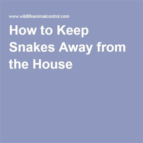 9 Things To Keep Away From Your by Best 25 Keep Snakes Away Ideas On Snake