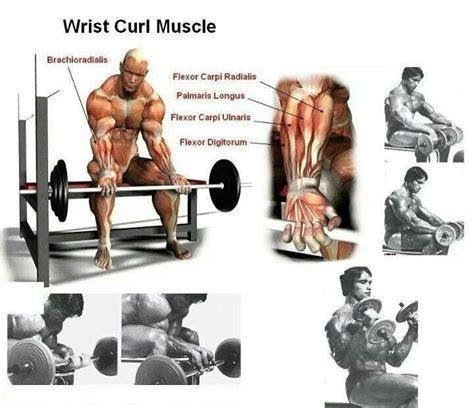 bench wing curl 92 b 228 sta bilderna om bodybuilding p 229 pinterest