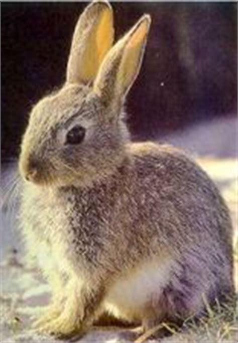 imagenes animales que respiran por los pulmones clari 243 n pizarra digital