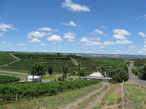 panoramio photo of mclaren vale wine region south