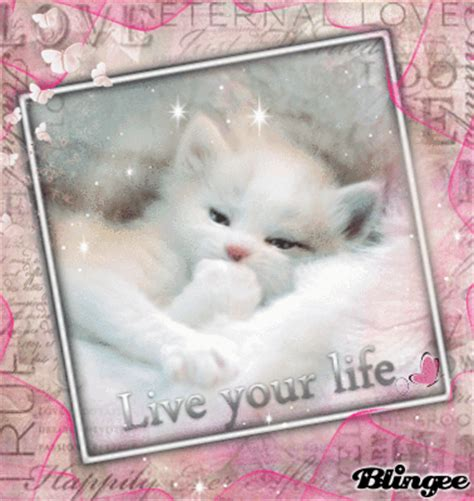 pink cute cat picture  blingeecom