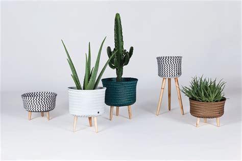 vasi per piante da interni piante da interni vasi e complementi e i consigli per