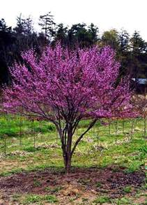 best trees to plant flowering trees for small shaded