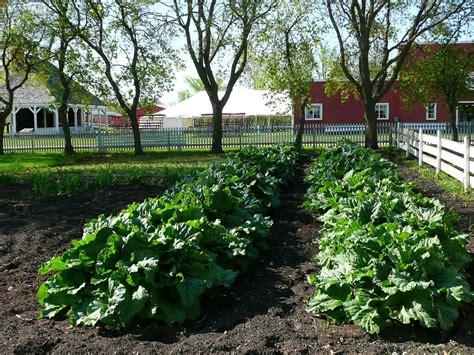 planning a backyard garden planning your backyard vegetable garden