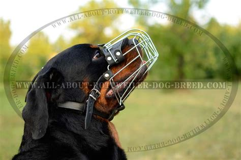 cage for rottweiler get walking wire basket rottweiler muzzle socializing obedience