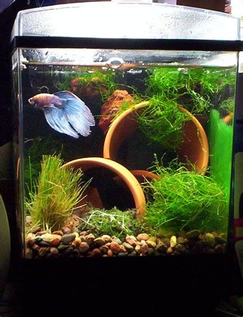 aquarium design betta fish tank setup pet pinterest shelters happy and