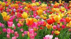 Foliage Plants Definition - flores de tulip 225 n agriculturers com red de especialistas en agricultura