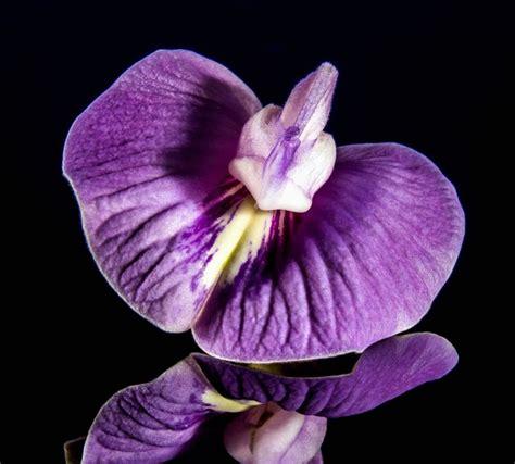 fiore di orchidea foto gratis fiore di orchidea fiore viola viola fiore