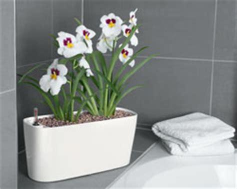 Plantes Appartement Sombre by Plante Pour Appartement