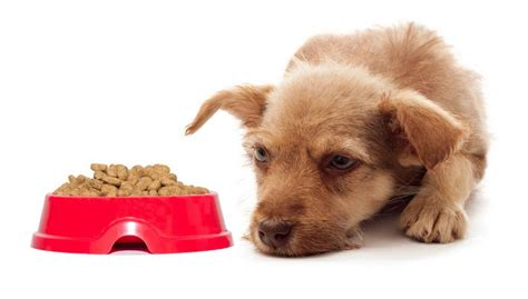7 Things To Consider When Picking Pet Food by 15 Things You Must To Avoid Choosing Bad Food